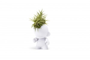 Munny Mini Mohawk - Ionantha Airplants