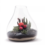 Large Succulent Terrariums: the Perfect Focal Point in a Room's Décor