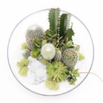 Artistic Terrariums to Decorate South Florida Homes