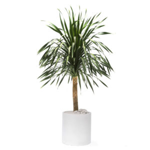 Indoor Plants For Minimalist Interior Design