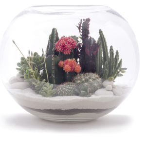 Open Terrariums Created by a Miami Artist