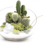 4 Large Terrariums That Make the Perfect Centerpiece