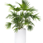4 Unusual House Plants for Your Florida Home