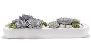 The Symbolic Meaning Behind Succulent Arrangements