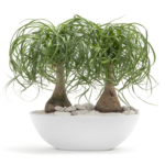 Modern House Plants Perfect for Sub Tropical Climate