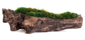 yoga room interior design - moss with natural wood